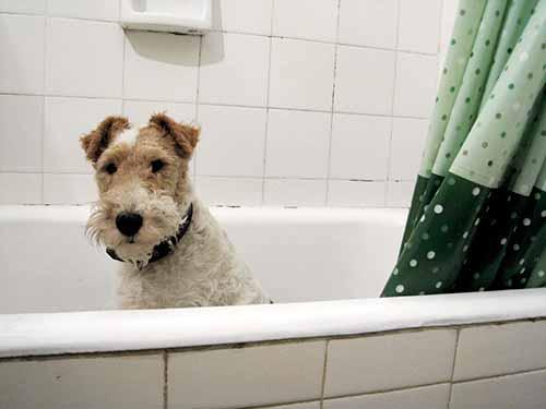 Wasch mich, aber mach mich nicht nass.